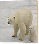 Polar Bear With Cub Wood Print