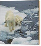 Polar Bear With Cubs On Pack Ice Wood Print