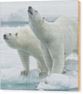Polar Bears, Mother And Son Wood Print