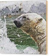 Polar Splash Wood Print