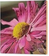 Polaroid Pink Daisy Wood Print