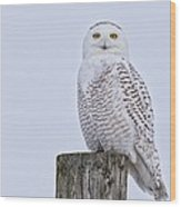 Pole Perched Snowy Wood Print