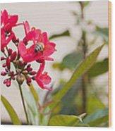 Polen Gathering Bee Wood Print