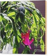 Polka Dot Easter Cactus Wood Print
