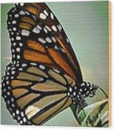 Polka Dots And Wings Wood Print