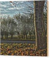 Pollard Willows In Rotterdam Wood Print