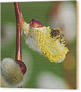 Pollen Feast Wood Print
