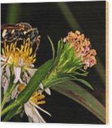 Pollen Wood Print