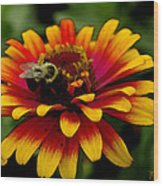 Pollenating Bumblebee Wood Print