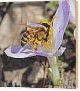 Pollinated Wood Print