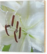 Pollinated White Tiger Lily Wood Print