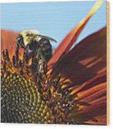 Pollinating Sunflower Seeds Wood Print
