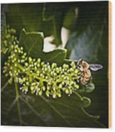 Pollination Wood Print by John Monteath