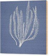 Polypodium Fuscatum Wood Print by Aged Pixel