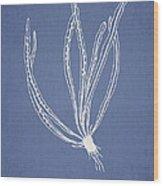Polypodium Subevenosum Wood Print