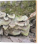 Polypore Abstract Wood Print