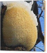 Pom Pom Mushroom Wood Print