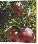 Pomegranate Tree  Wood Print