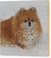 Pomeranian In Snow Wood Print