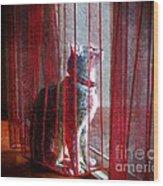 Poncho Watching It Rain Wood Print