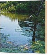 Pond 3 Wood Print
