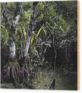 Pond Apple Wood Print