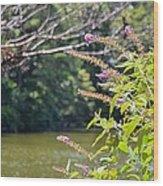Pond At Norfolk Botanical Garden 12 Wood Print