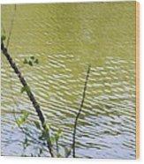 Pond At Norfolk Botanical Garden 8 Wood Print