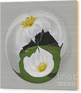 Pond Flower Orb Wood Print