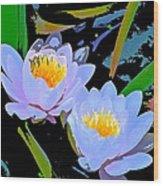 Pond Lily 17 Wood Print