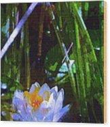 Pond Lily 28 Wood Print