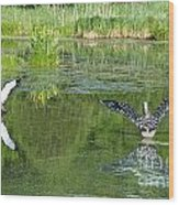 Pond Pairs Dancing Wood Print