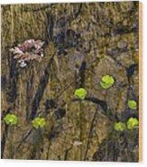Pond Scene Wood Print