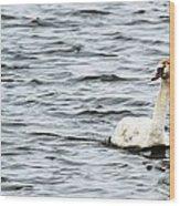 Pond Swan Wood Print