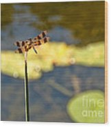 Pond Visitor Wood Print