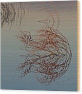 Pond Weed Reflections Wood Print