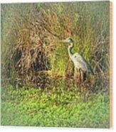 Pond Wildlife Wood Print