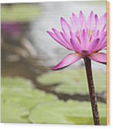 Pond With Pink Water Lily Flower Wood Print