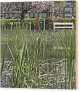 Pond With Reed Wood Print