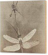 Pondhawk Dragonfly Wood Print