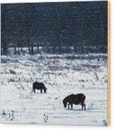 Ponies In The Snow Wood Print