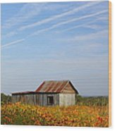 Pontotoc Shed 2am-110573 Wood Print