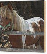 Pony Horse Wood Print