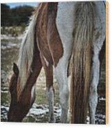 Pony Tail Wood Print