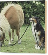 Pony With Lead Rope Held By Sitting Dog Wood Print