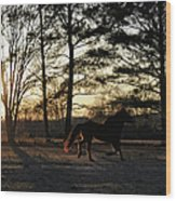 Pony's Evening Pasture Trot Wood Print