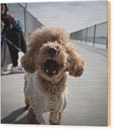 Poodle Dog Wood Print
