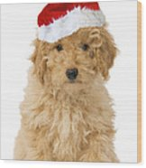Poodle In Christmas Hat Wood Print
