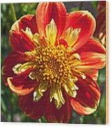 Pooh Dahlia Flower Wood Print