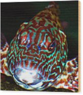 Poopaa Hawaiian Hawk Fish Wood Print